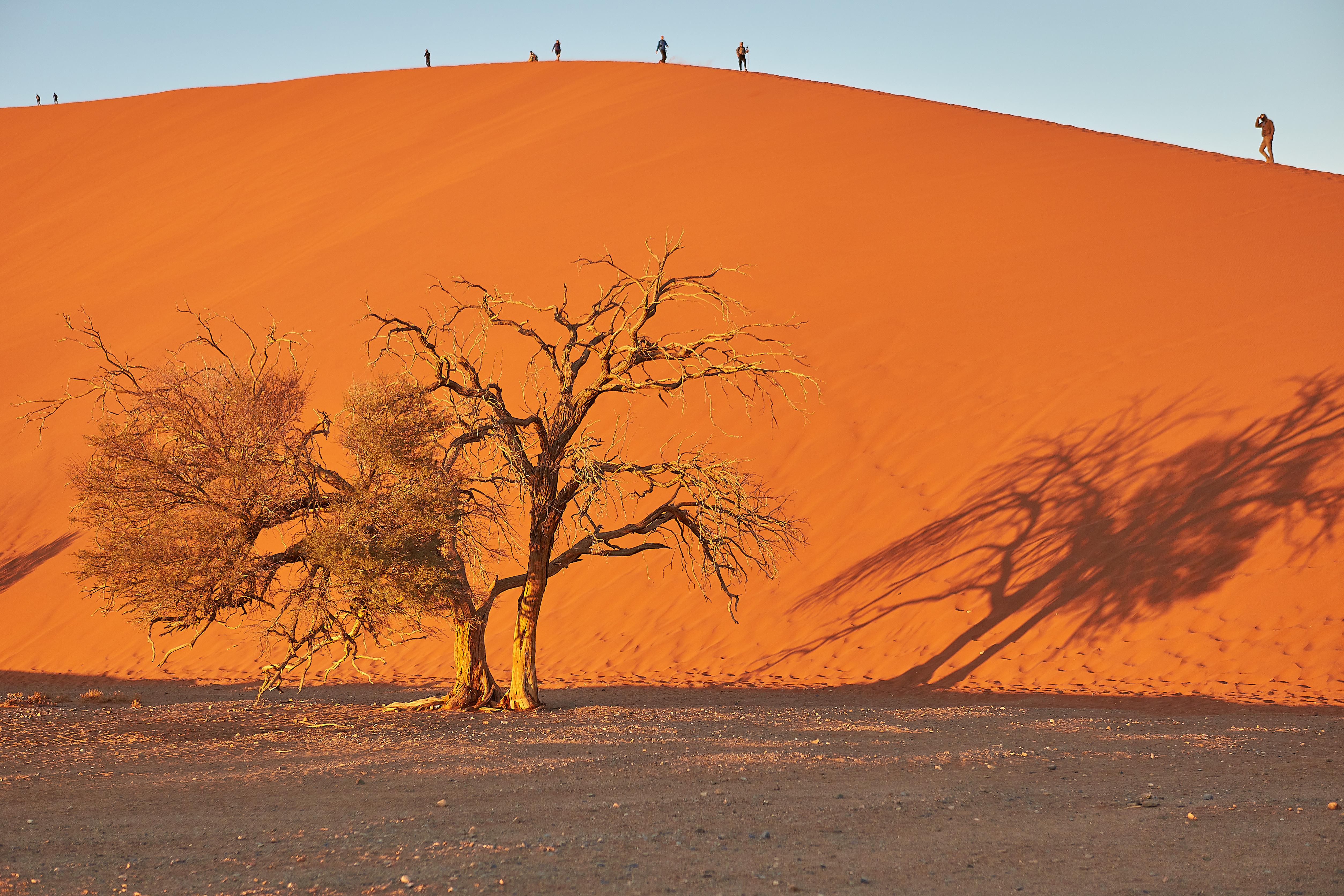 File Lone Tree In Front Of Dune 45 Sossusvlei Namibia Jpg