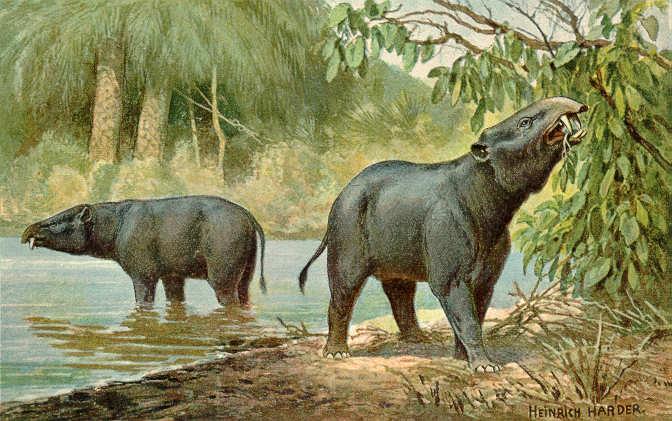 Elefantes Prehistóricos Moeritherium