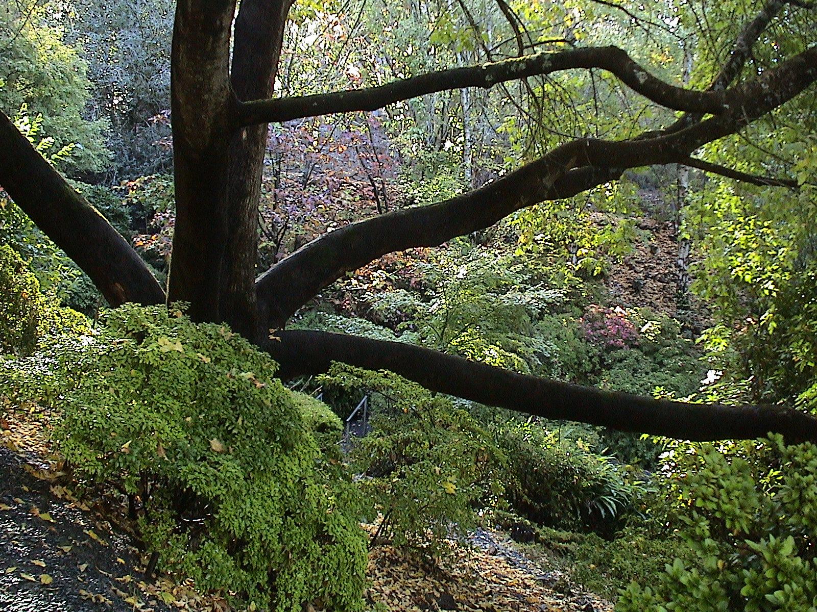 File Mount Lofty Botanic Garden Autumn4 Jpg Wikimedia