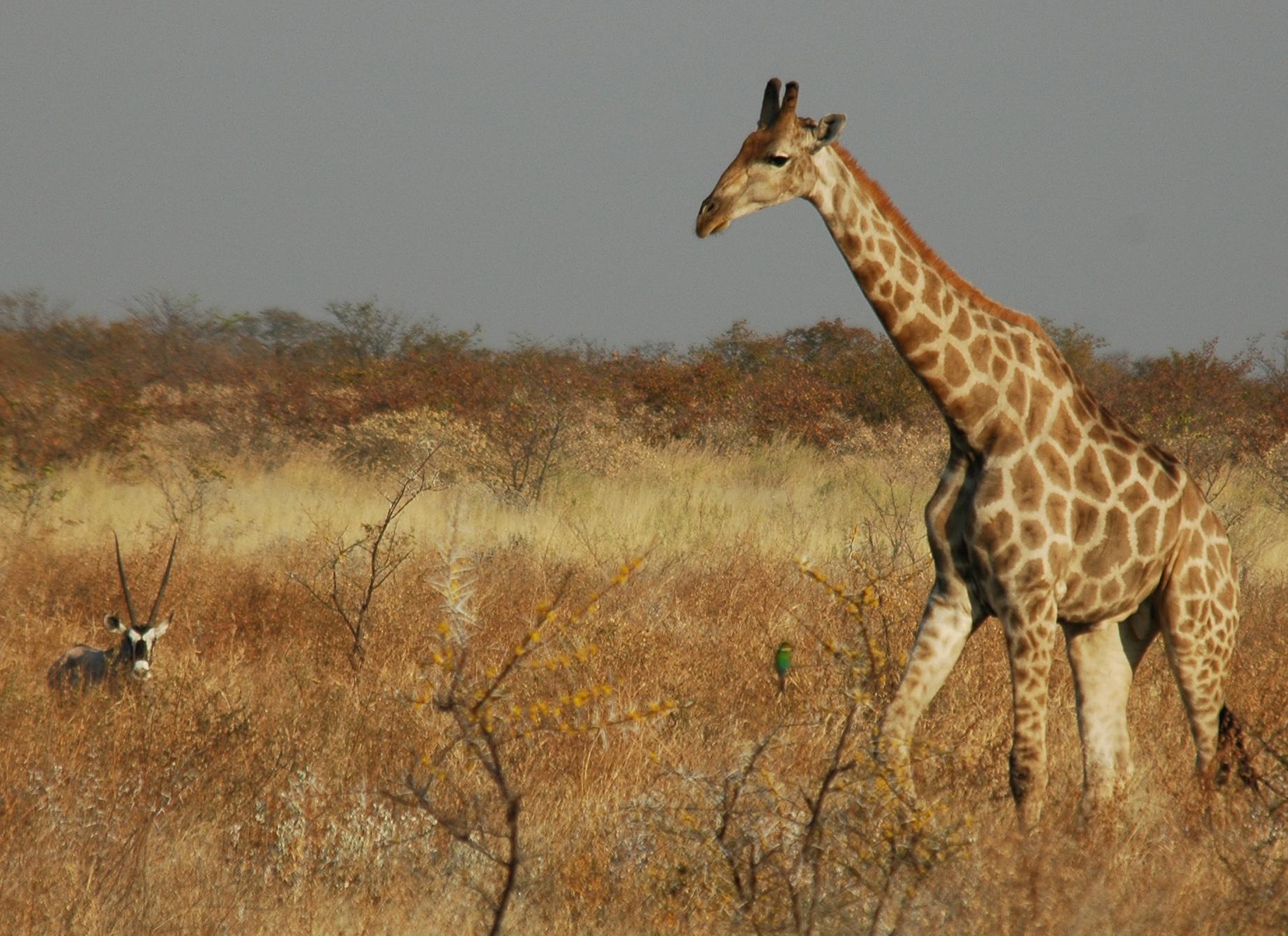 Namibia Botswana Safari Tours