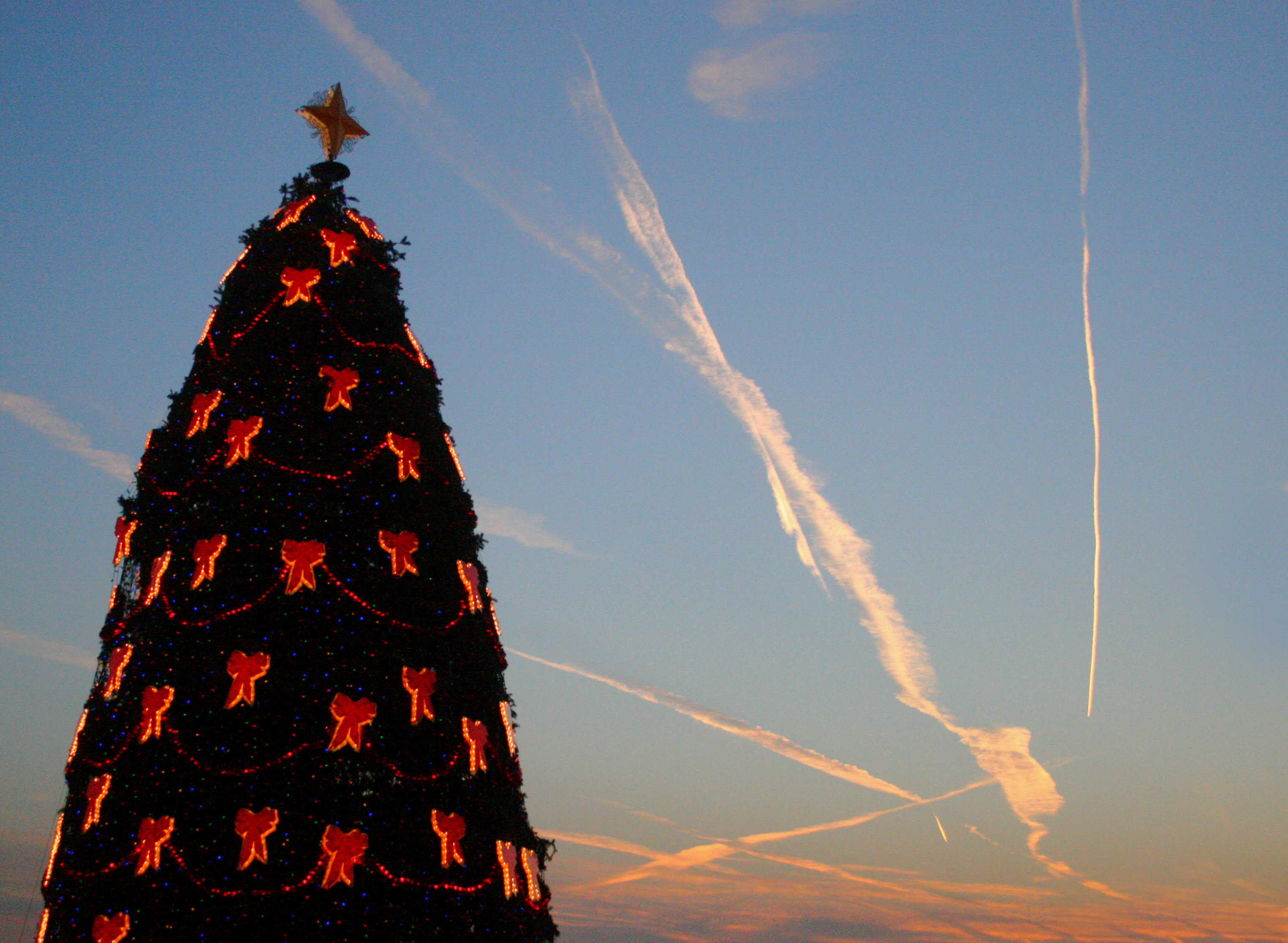 Albero Di Natale Wikipedia.File National Christmas Tree At The White House Jpg Wikipedia