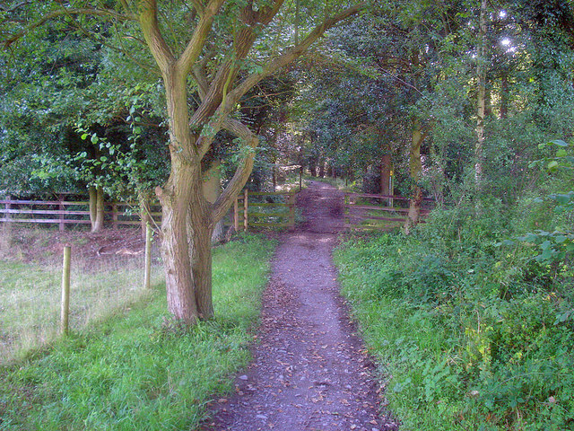 Path entering Swithland Wood - geograph.org.uk - 1471448