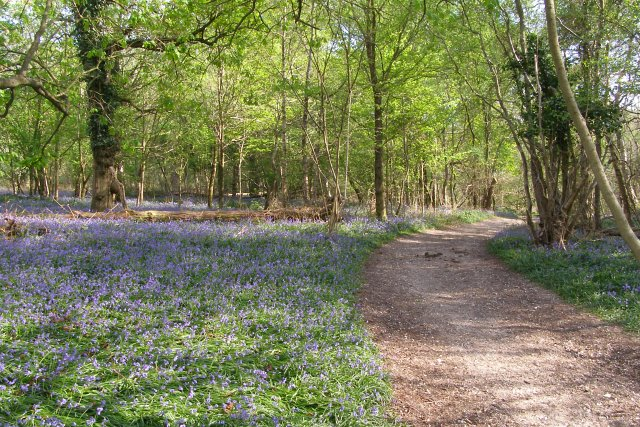 Path through Calveslease Copse, Roydon Woods, New Forest - geograph.org.uk - 408513