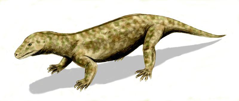 Procynosuchus BW.jpg