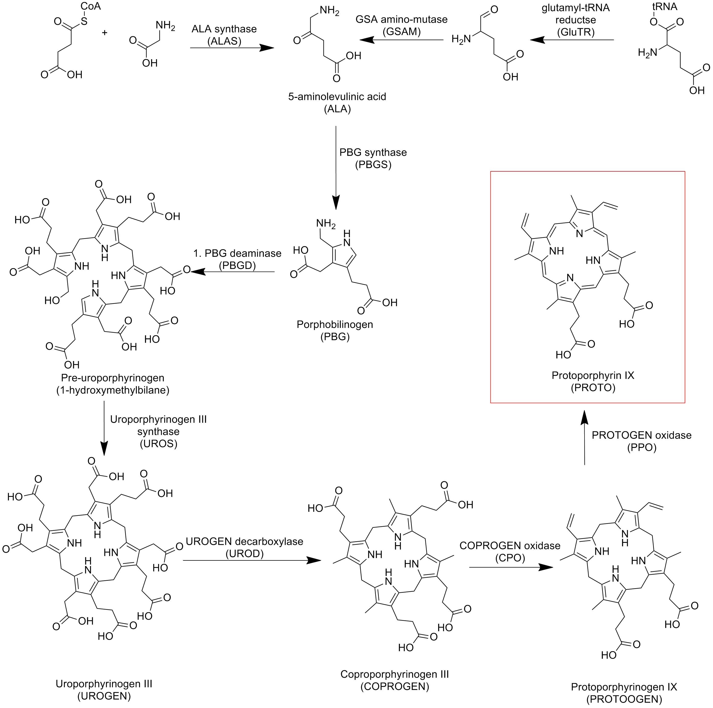 Протопорфирин Ix фото