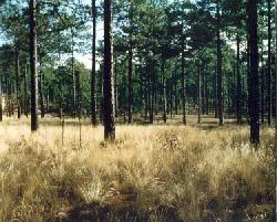 SC Carolina Sandhills National Wildlife Refuge (7256122648).jpg
