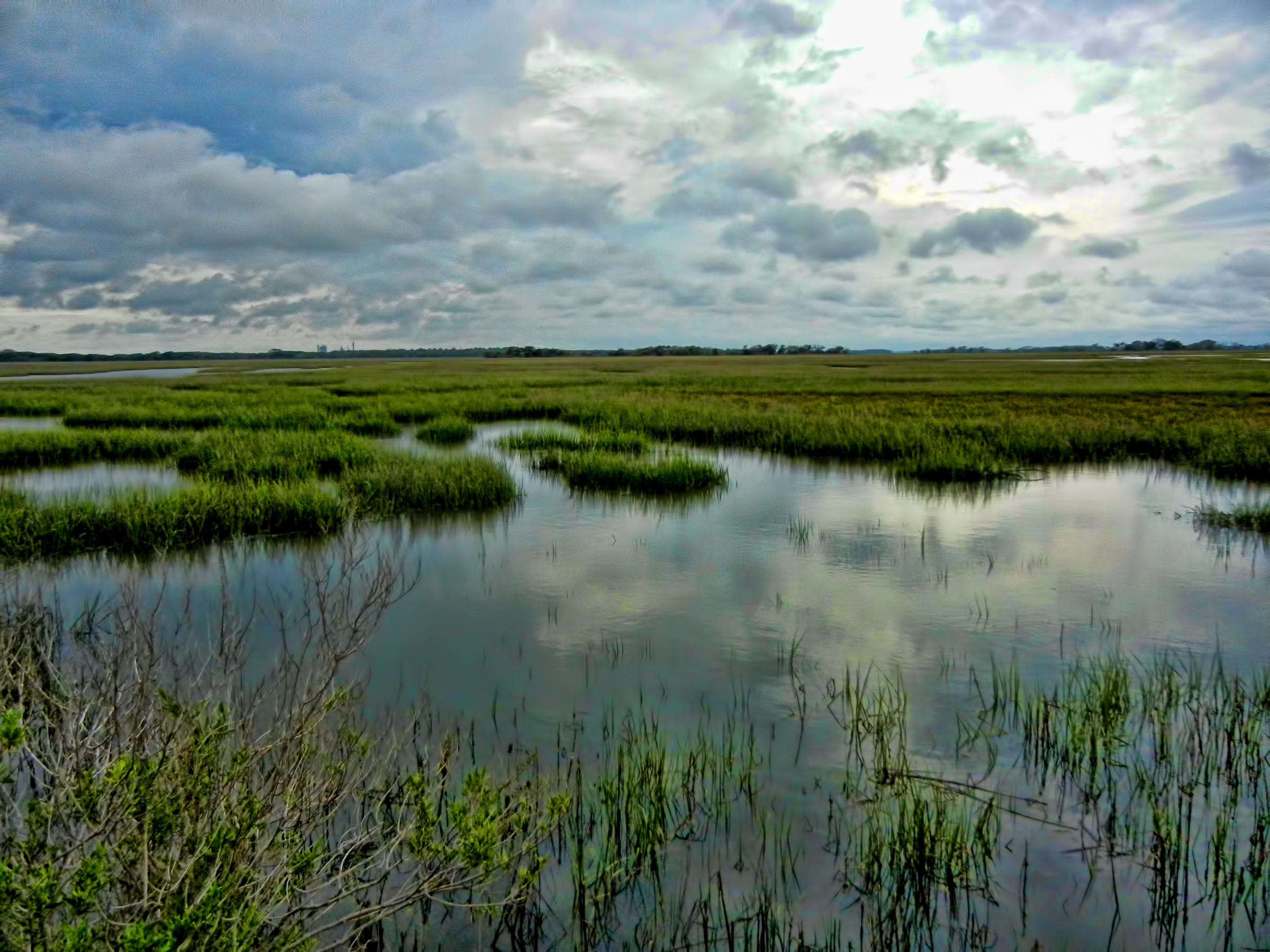 File:Salt marsh Georgia US.jpg - Wikimedia Commons
