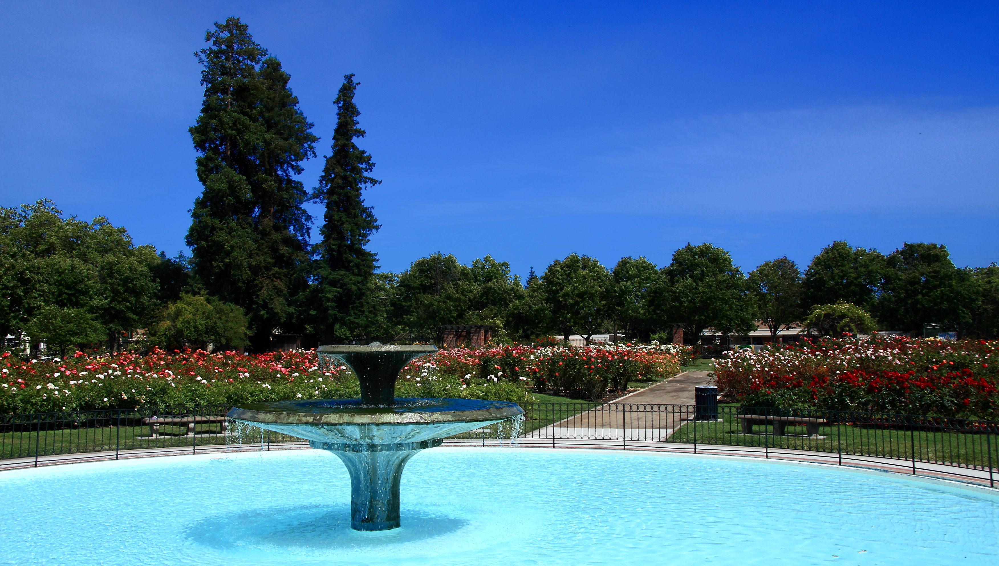 Roses In Garden: File:San Jose Municipal Rose Garden1.jpg