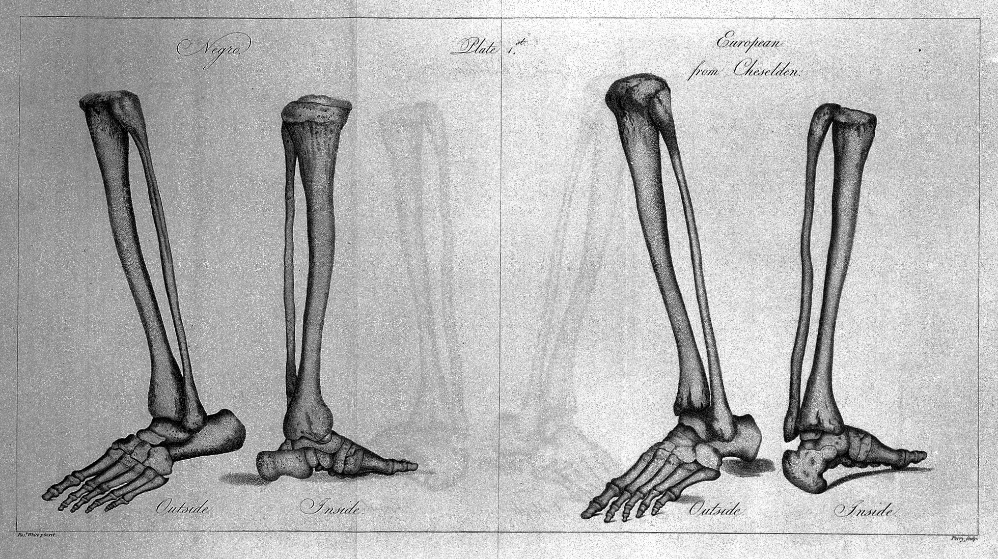 Fileskeletal Anatomy Of Lower Leg 1799 Wellcome L0030019g