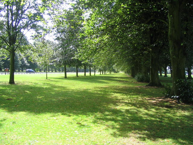 Tree lined drive, Coombe Park - geograph.org.uk - 920016