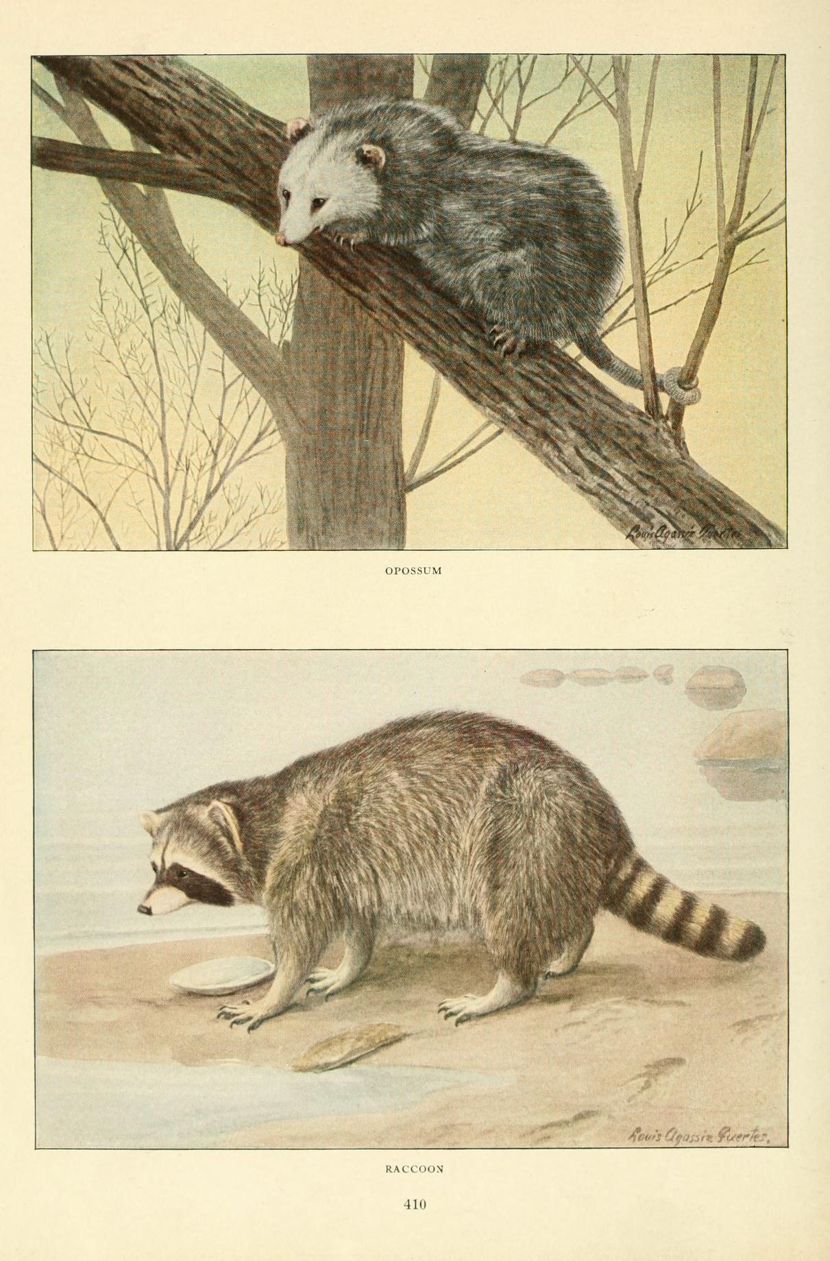 File:Wild animals of North America, intimate studies of big