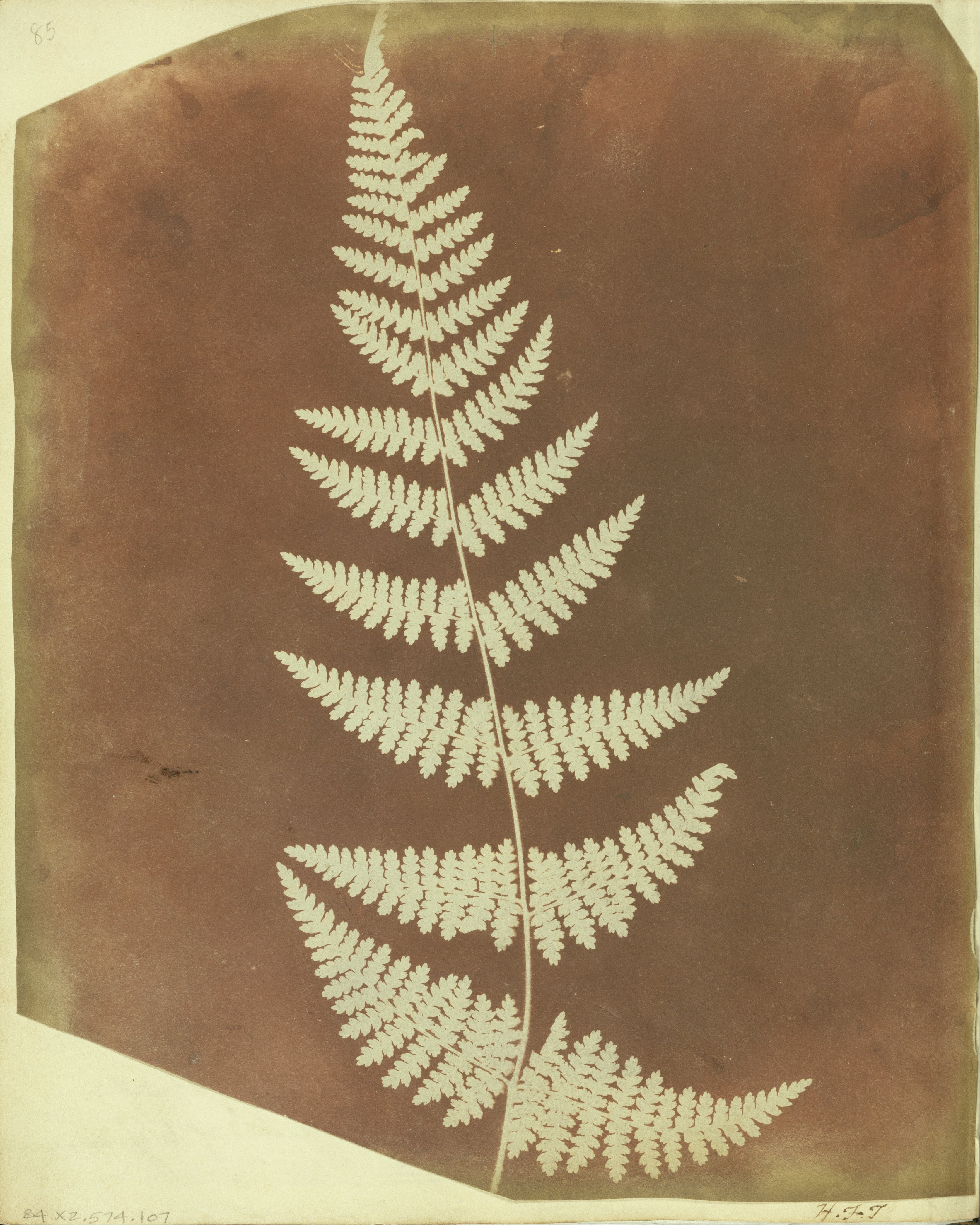 Fern Pictures Art Fern Google Art
