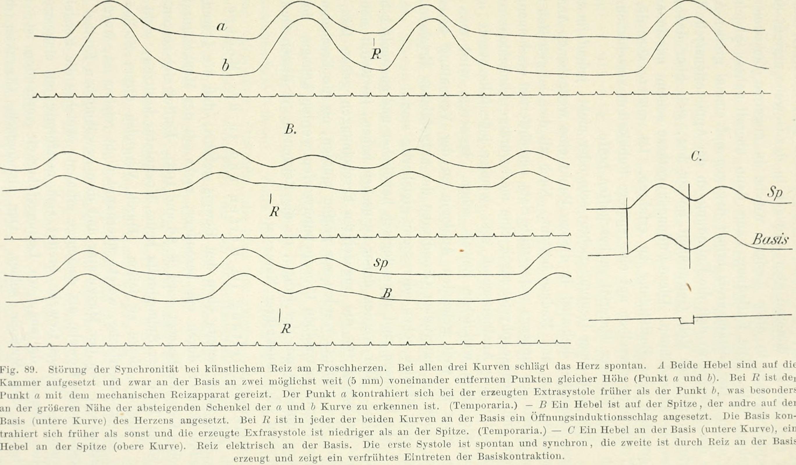 Wunderbar Anatomie Und Physiologie Des Nervensystems Pdf Fotos ...