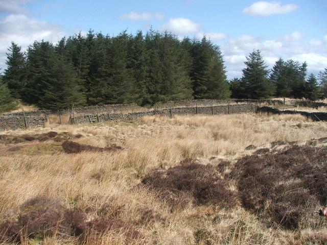 Back Plantation. - geograph.org.uk - 153338