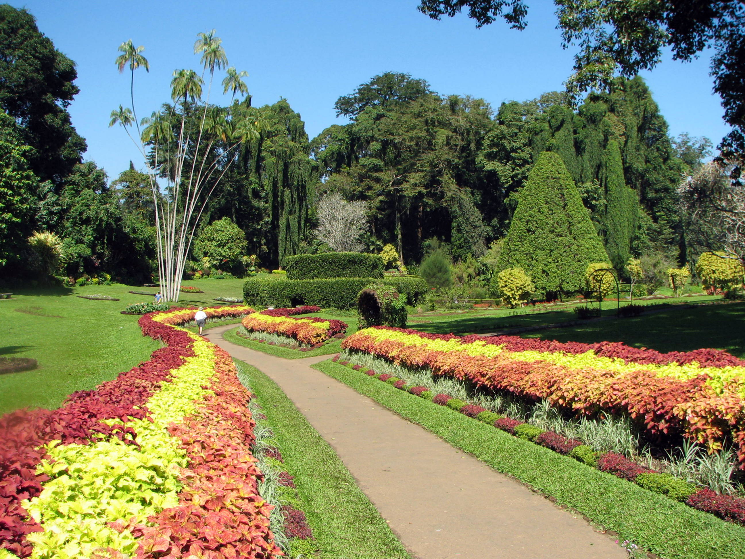 Royal Botanical Gardens Peradeniya Wikipedia
