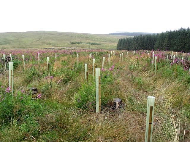 Planting Under Deciduous Trees : Description deciduous tree planting geograph g