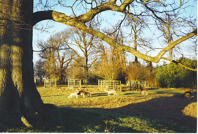 Deer in Petworth Park. - geograph.org.uk - 175596