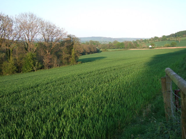 Field in the Coly valley - geograph.org.uk - 422338