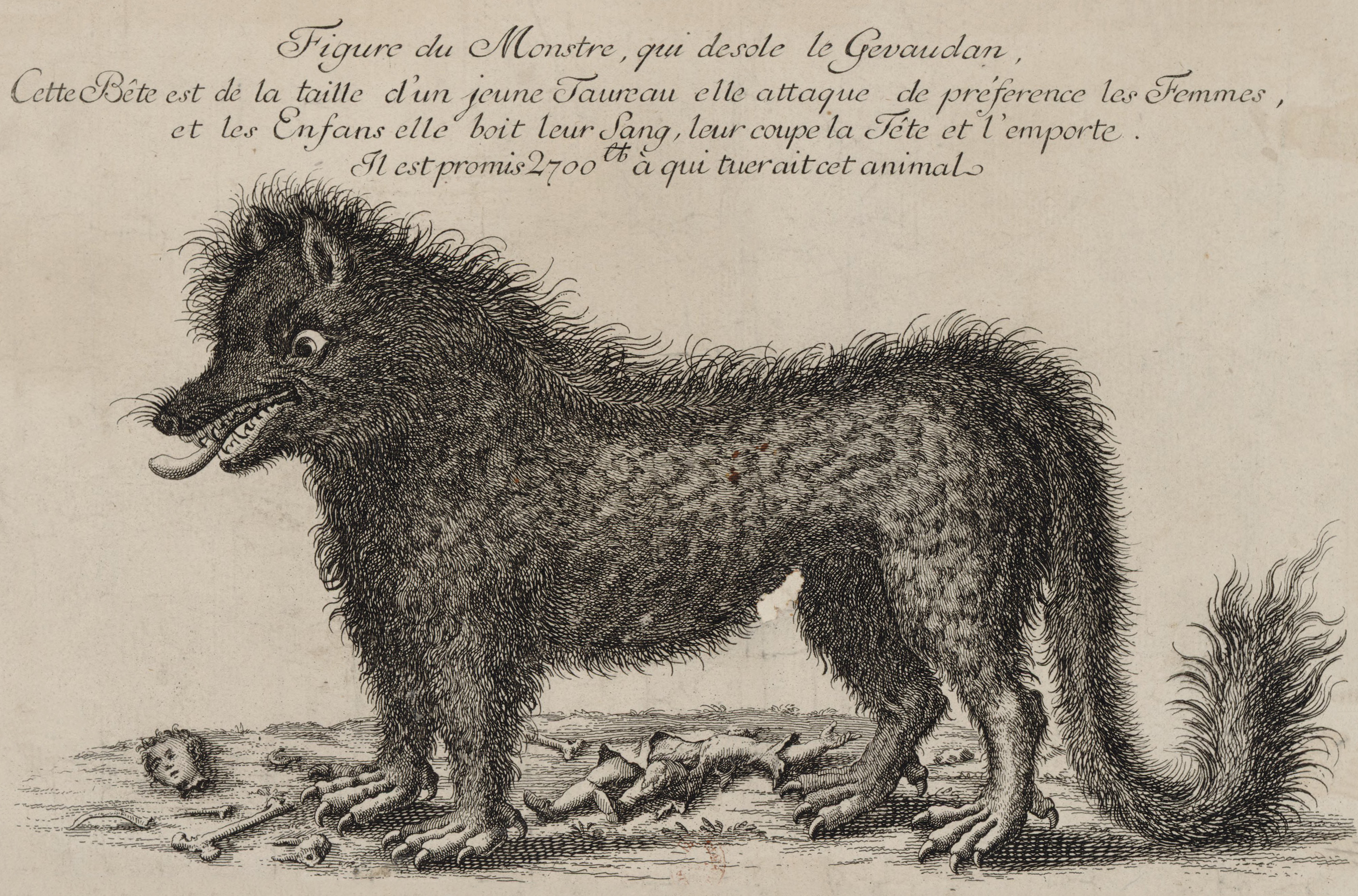 Drawing of what people thought the beast of Gévaudan looked like