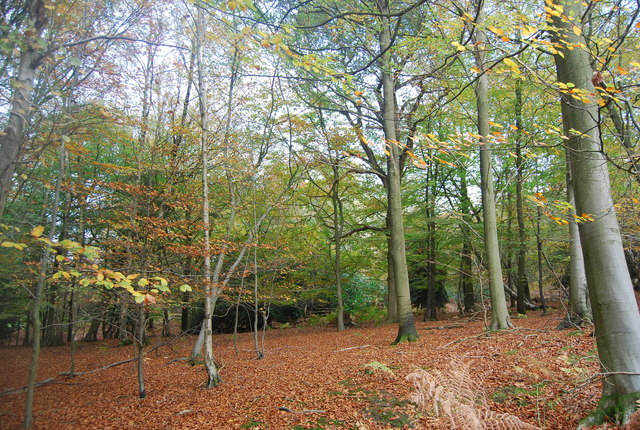 Five Hundred Acre Wood - geograph.org.uk - 1585002