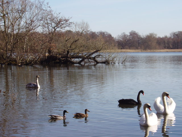 Fleet Pond - geograph.org.uk - 714794