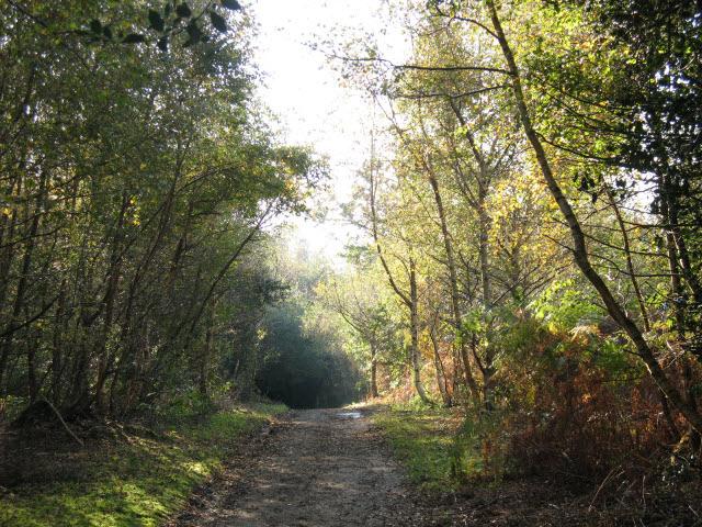 Footpath to Sevenoaks - geograph.org.uk - 1012809