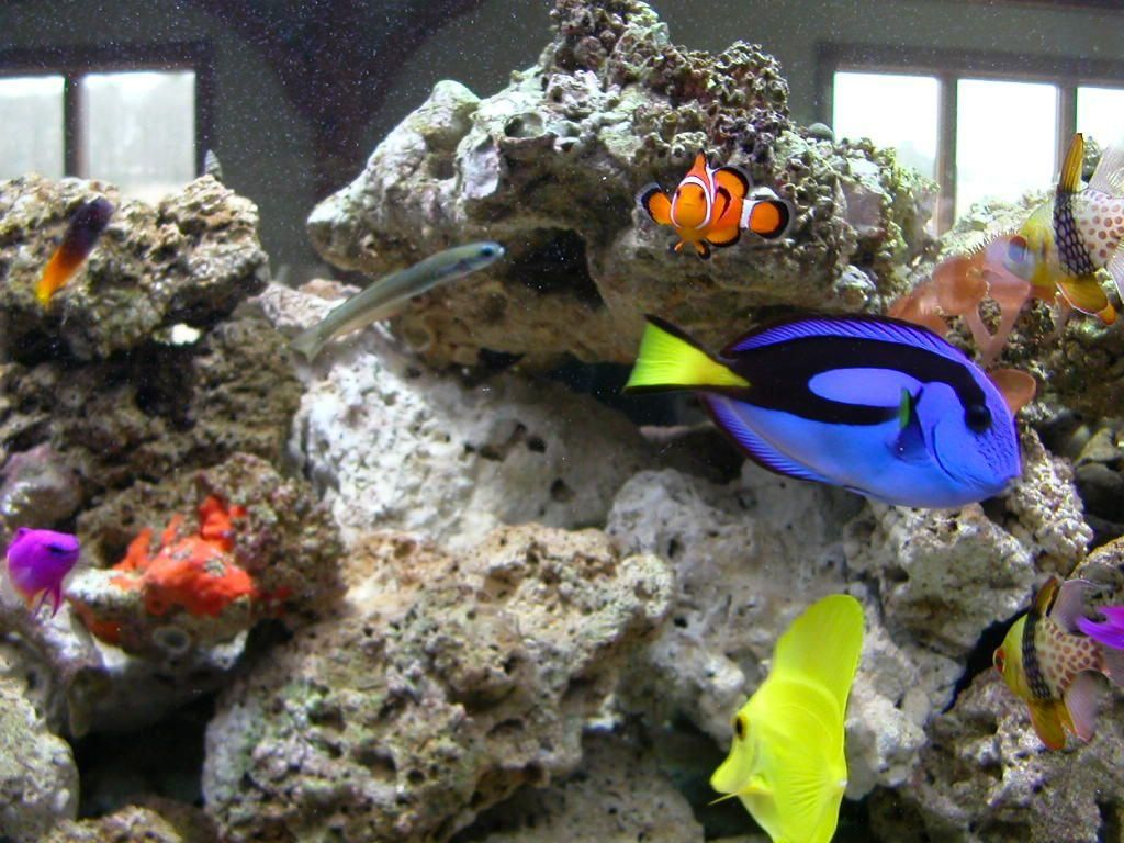 File:Group of real fishin aquarium.jpg - Wikimedia Commons