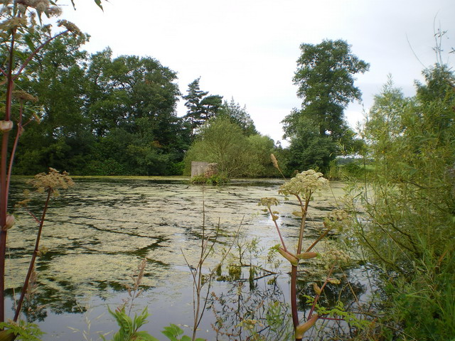 Inland Pool, Wrottesley Park - geograph.org.uk - 1420578