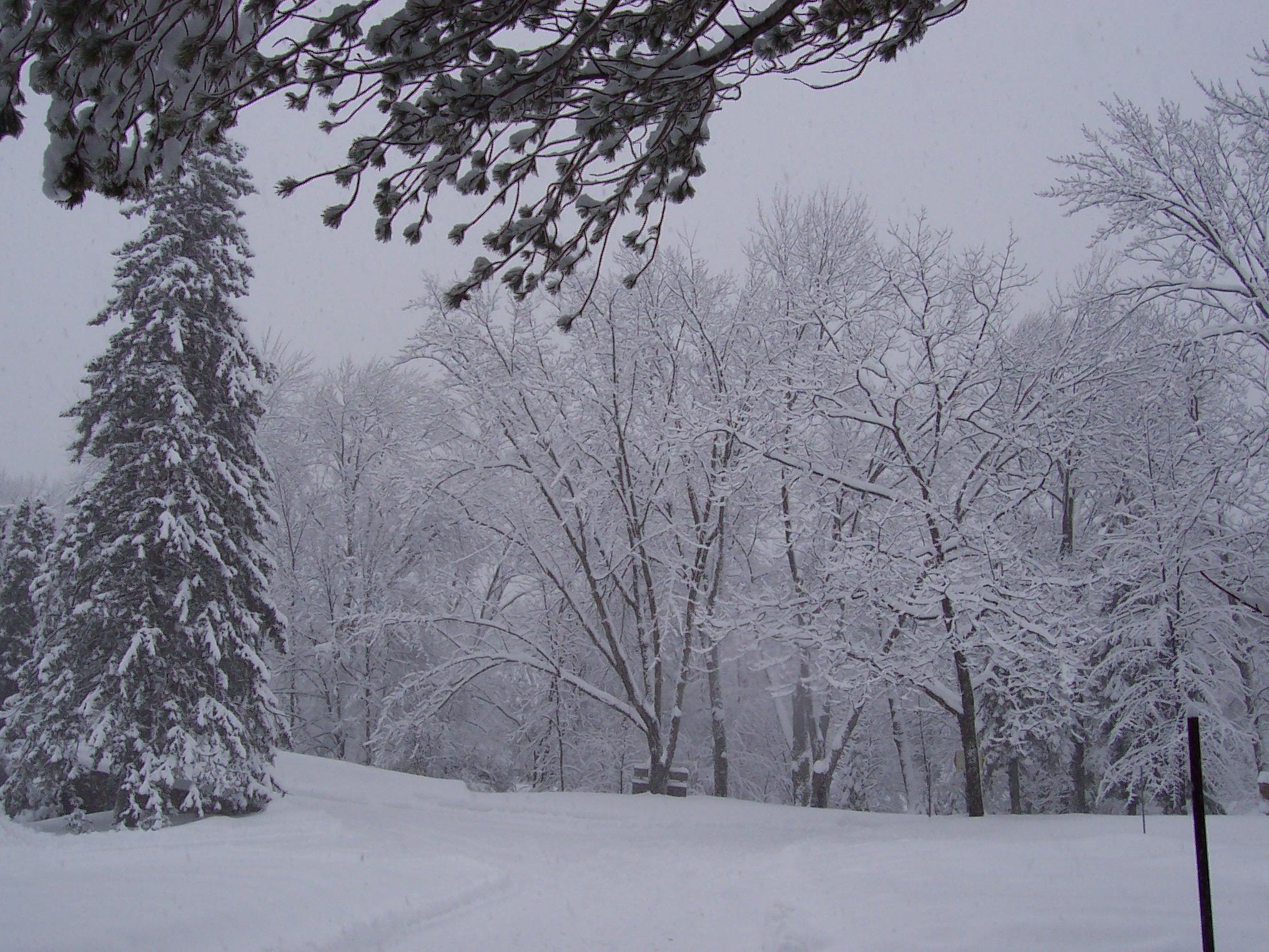 File jardin zoologique du qu bec en hiver 2006 02 jpg for Jardin en hiver