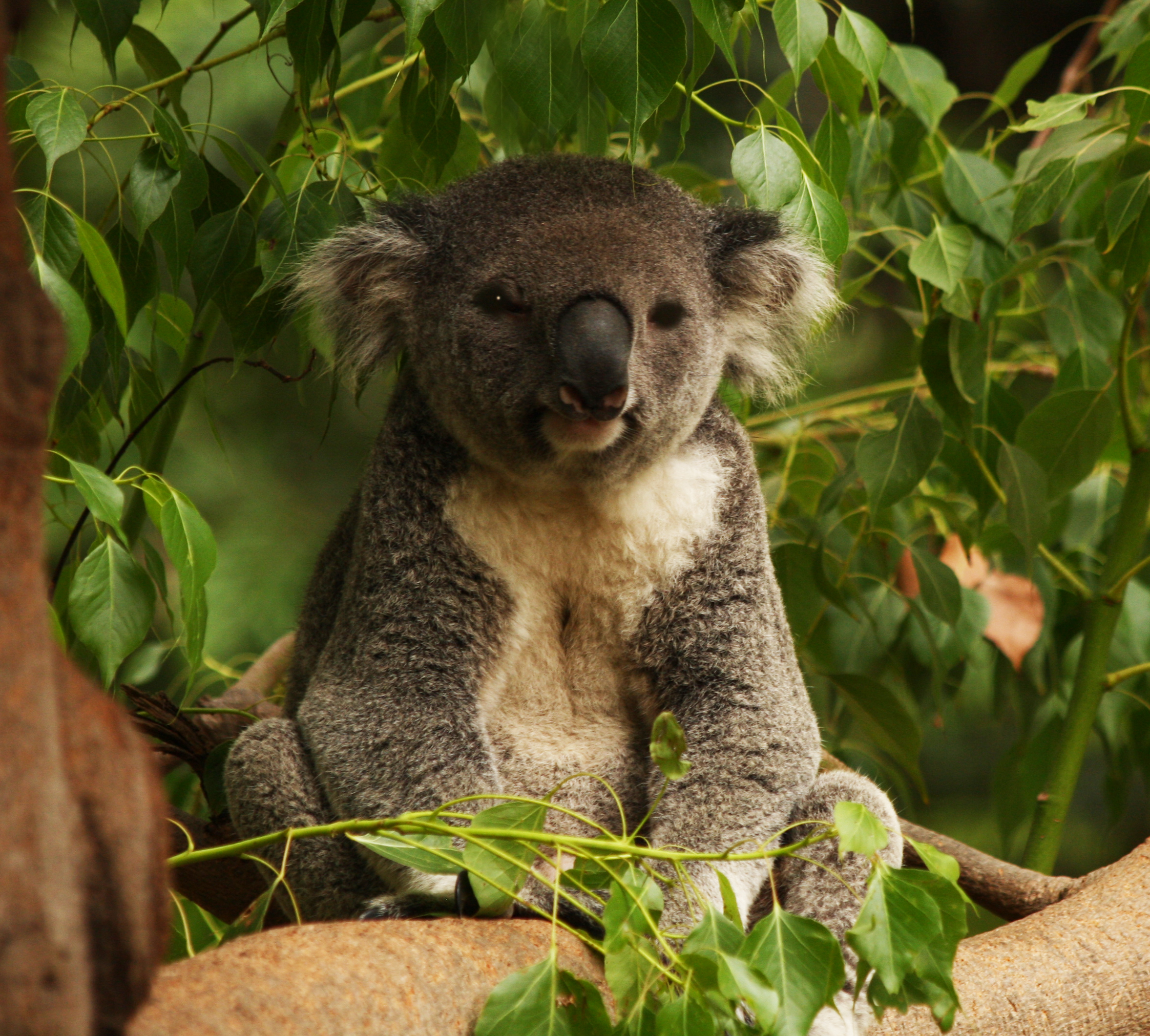 Australia Cute Island Kwocca