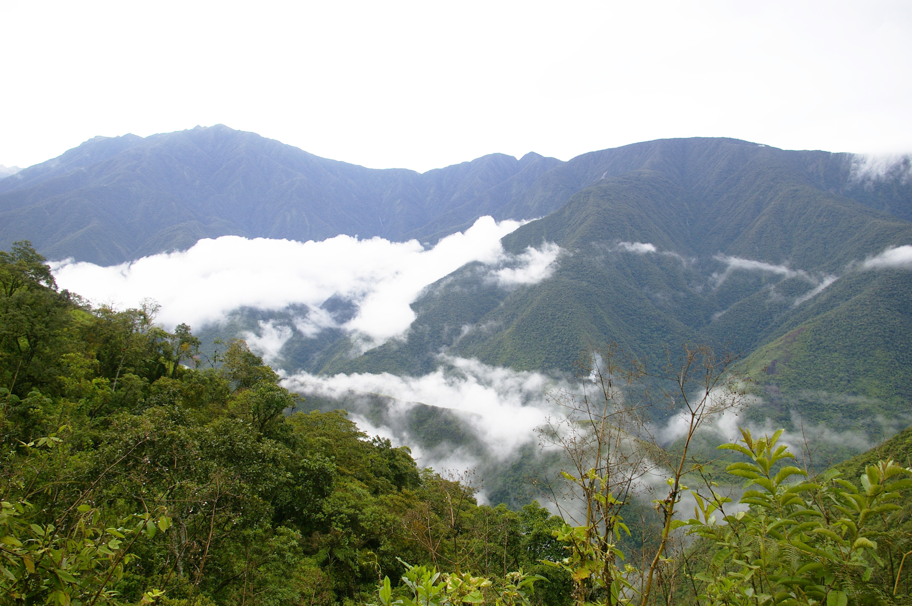 Los Yungas Bolivia Wikipedia La Enciclopedia Libre