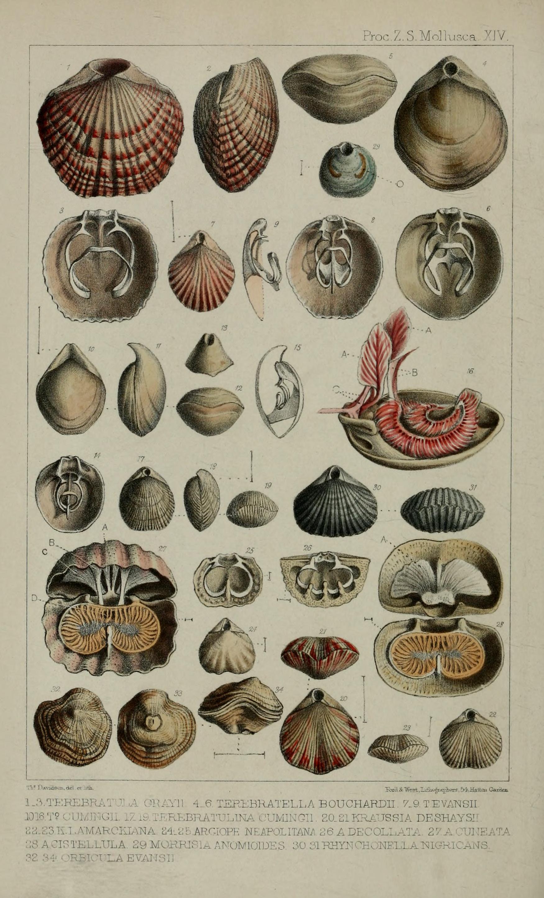 9700 Gambar Dan Nama Hewan Laut Terbaik