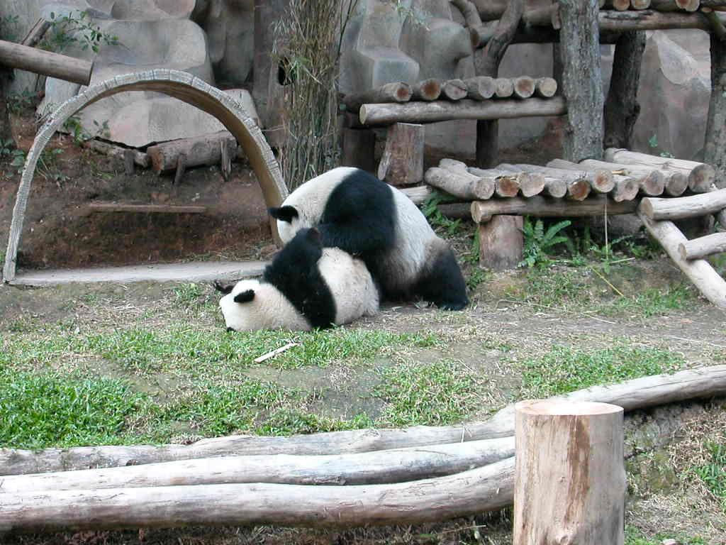 Chiang Mai Zoo - Wikipedia