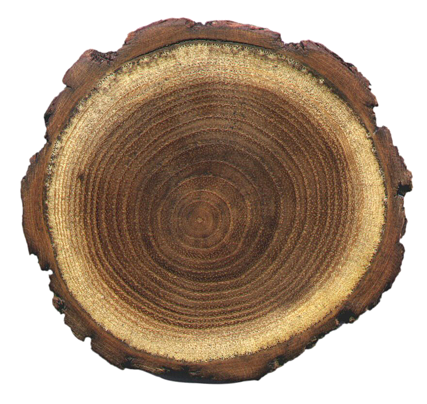 Tree Rings and Dendrochronology: Science Project for Kids