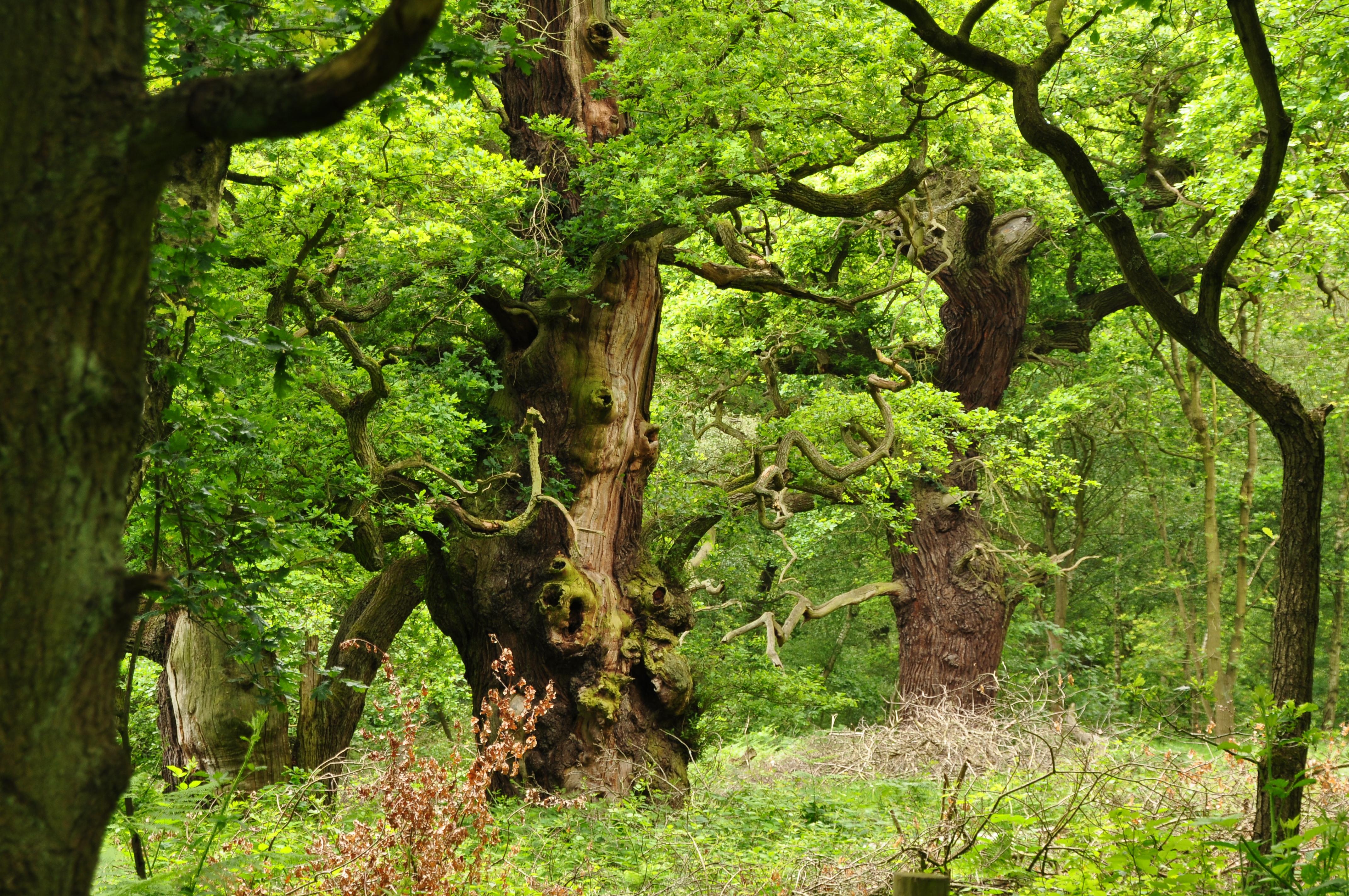 ???°???????????? ???? ?·?°?????????? sherwood forest photos