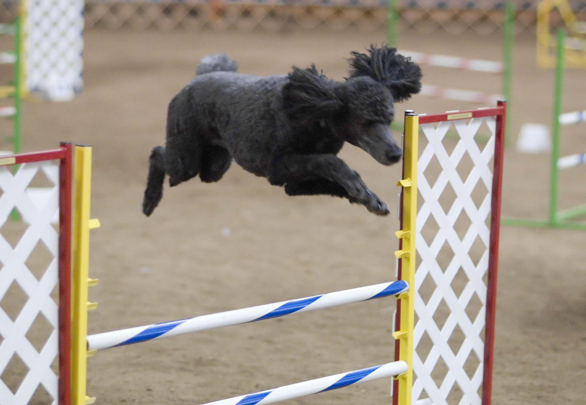 most athletic dogs
