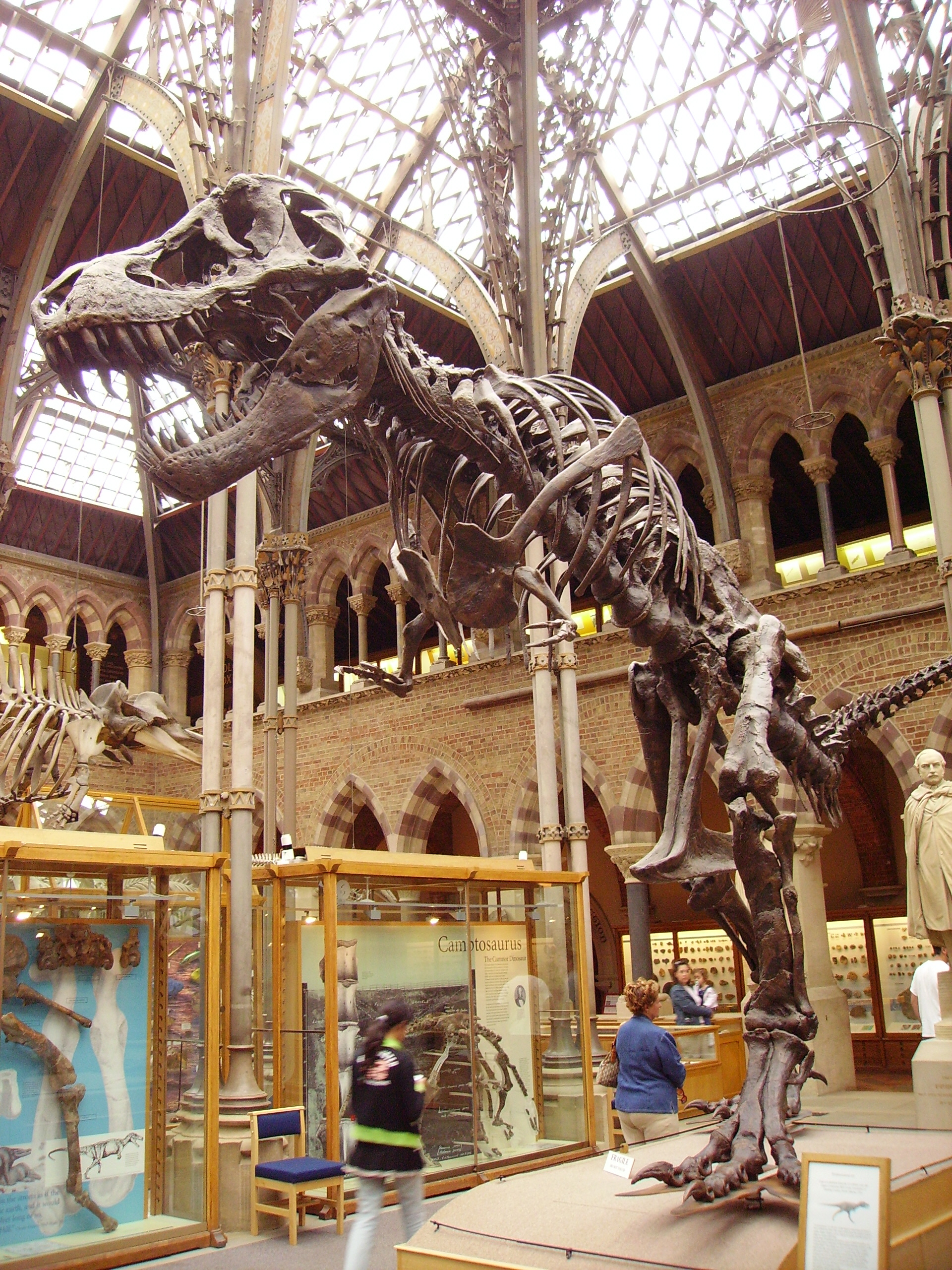 Oxford Al Museum Of Natural History