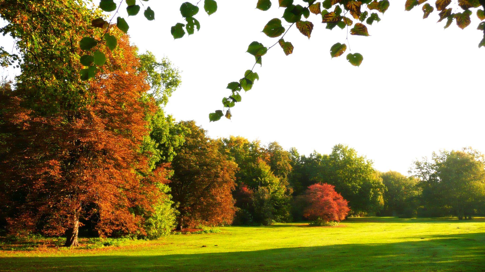 Berlin befindet sich in einer gemäßigten Klimazone (Großer Tiergarten im Oktober).