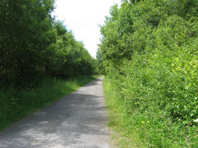 Track through Pembrey Forest - geograph.org.uk - 853870