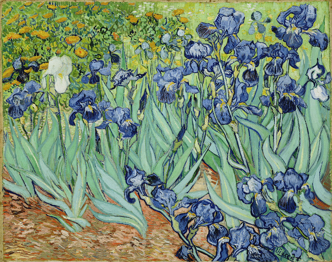 A field of flowers. The foreground includes long green stems with blue flowers, while the background includes prominent gold flowers on the left; white flowers in the center and a field to the right.