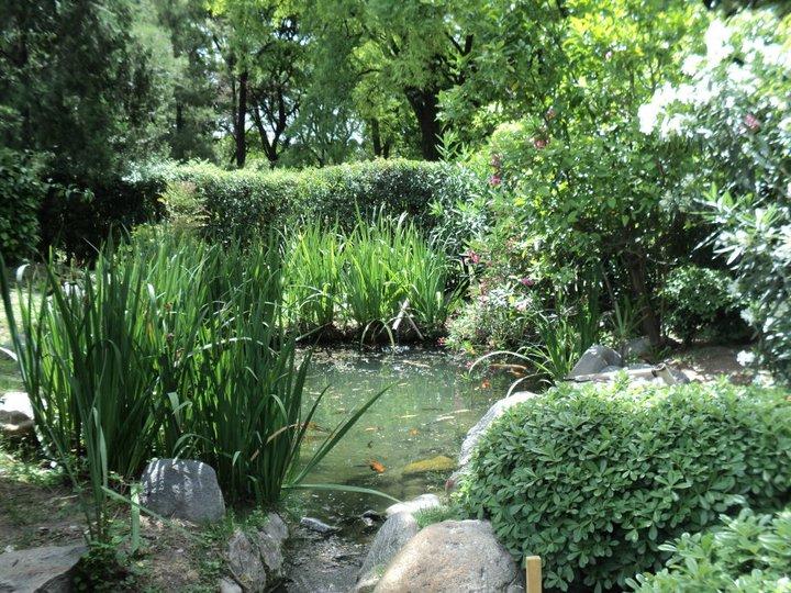 File vegetaci n del jard n japon wikimedia commons for Jardin japones piscina