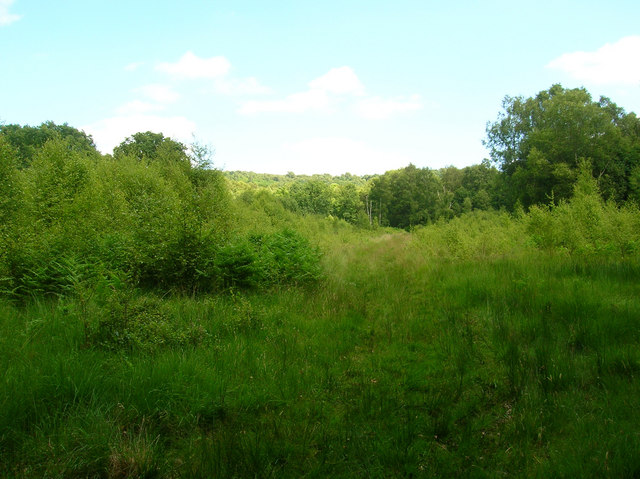 Woolbeding Common - geograph.org.uk - 864881