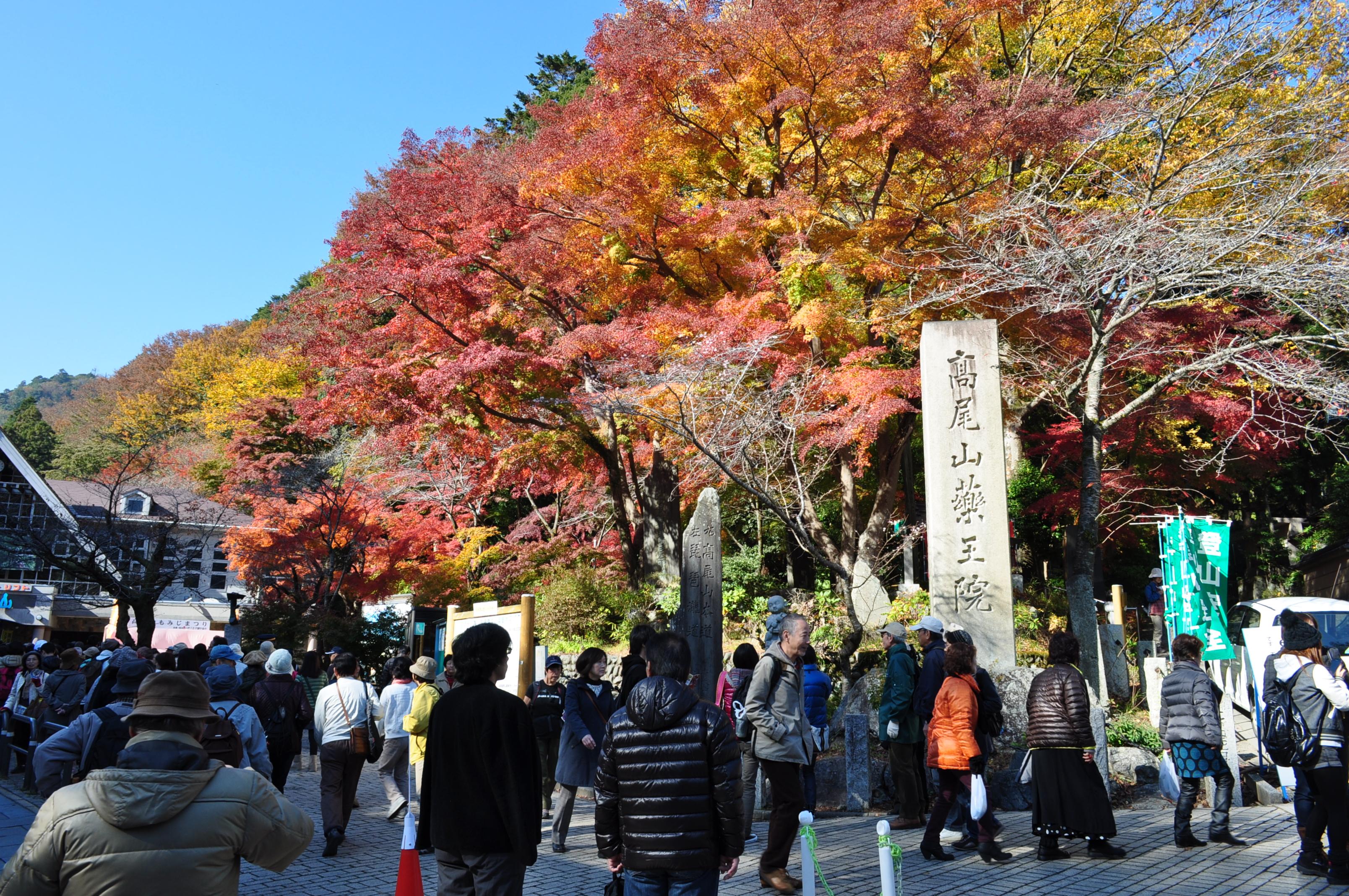 「高尾山 紅葉」の画像検索結果