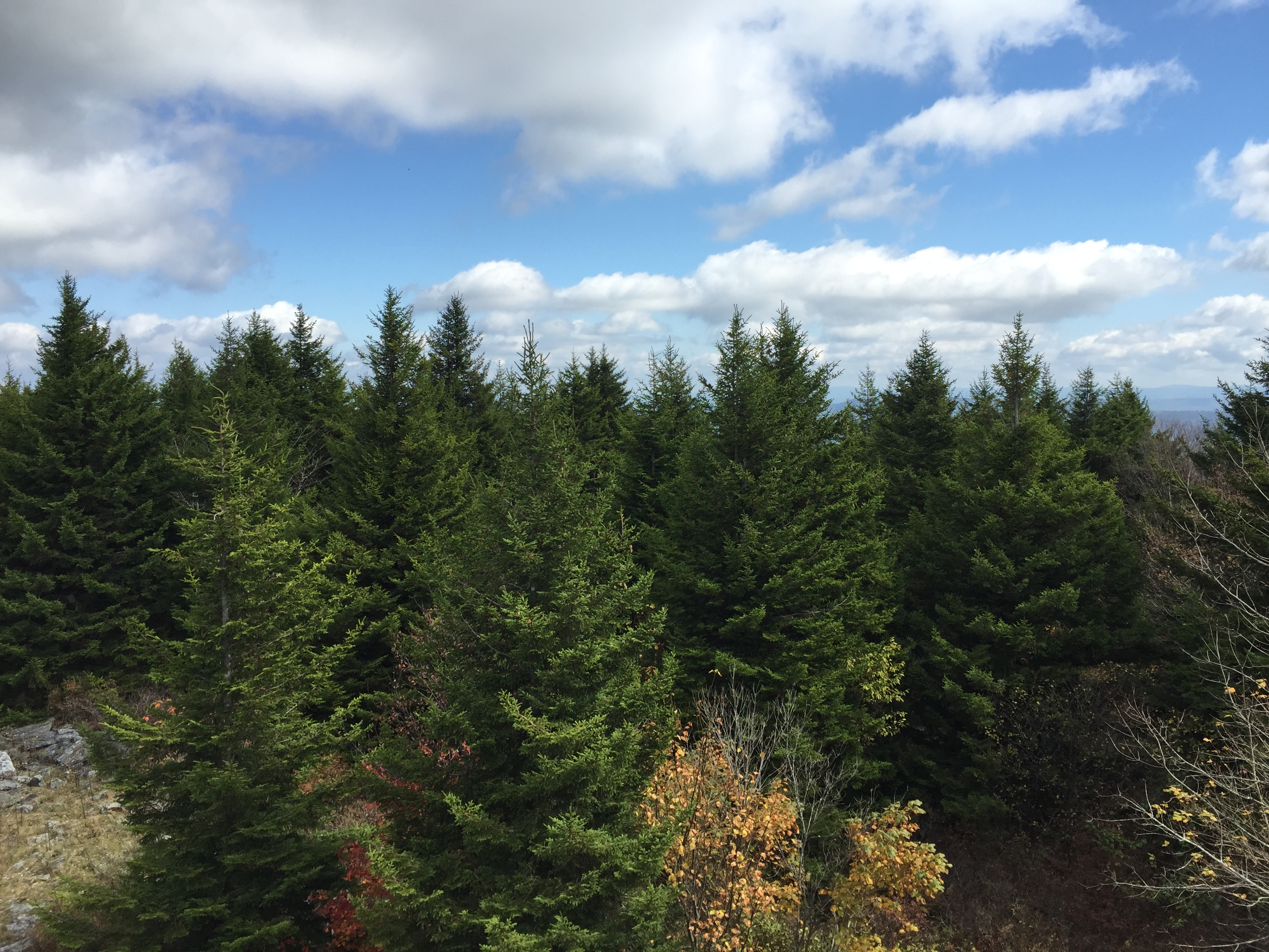 File:2015-10-07 12 59 23 View east across Red Spruce ...