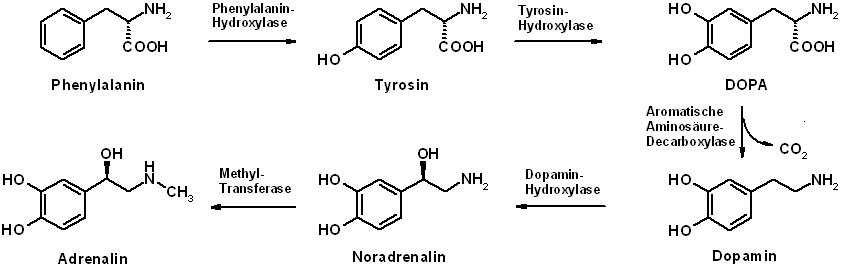 zuviel serotonin im körper