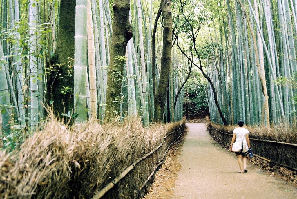 forêt de bambou géants en asie