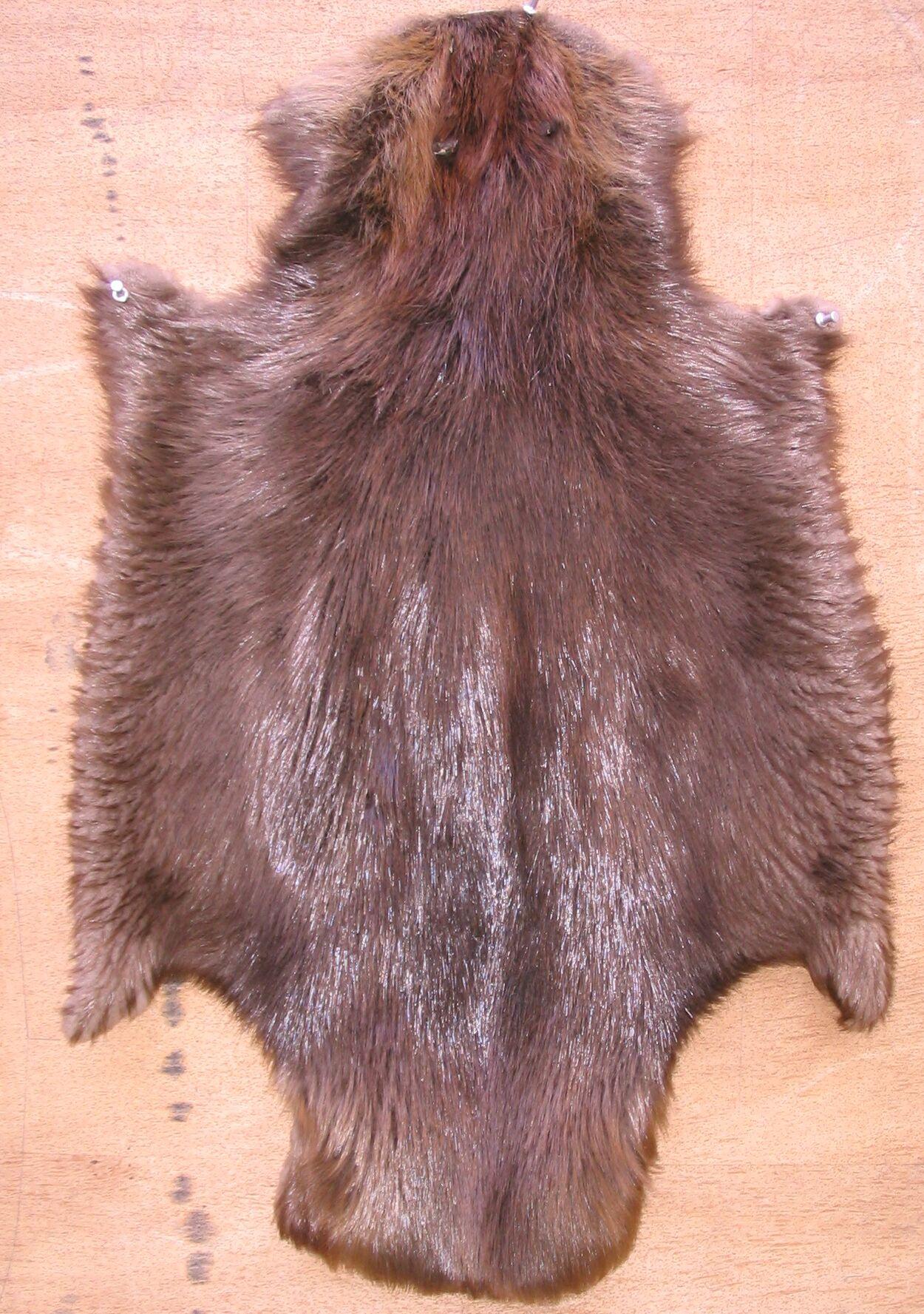 file beaver skin jpg wikimedia commons