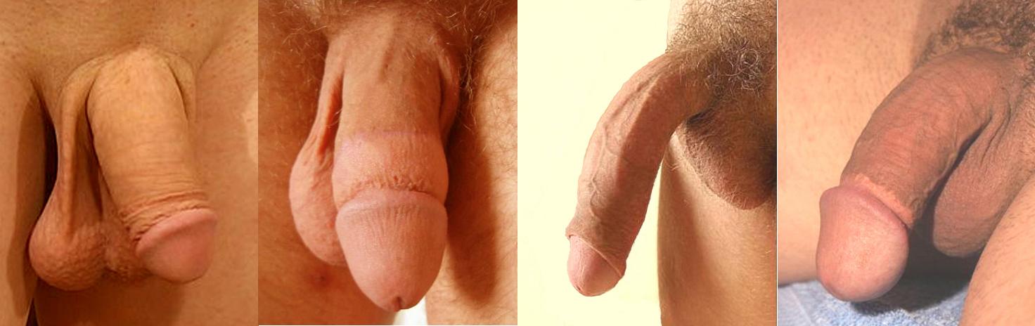 Фото мужских голых членов