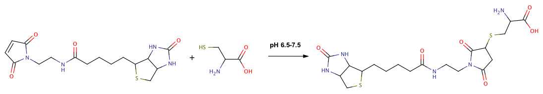 Biotin Maleimide Cysteine Reaction.png