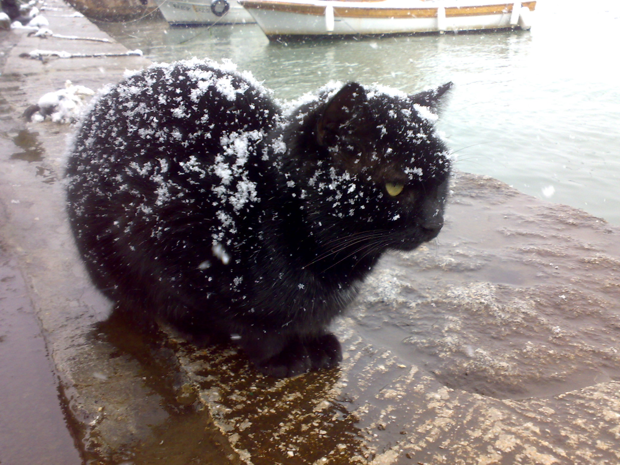 Description Black cat being snowed on.jpg